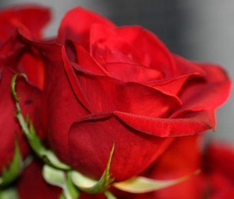 flowers-1428564_640