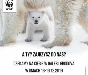 Galeria Grodova (2)